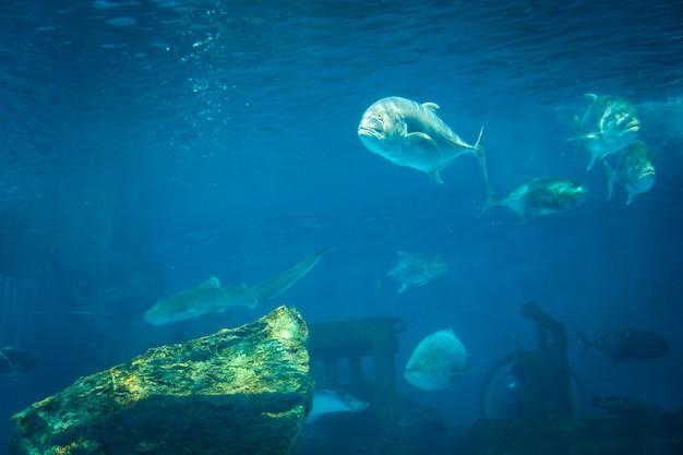 Niesamowity moment w akwarium rafy koralowej