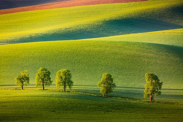 Niesamowity naturalny krajobraz wiosenny z drzewami i falującymi wzgórzami rolniczymi.