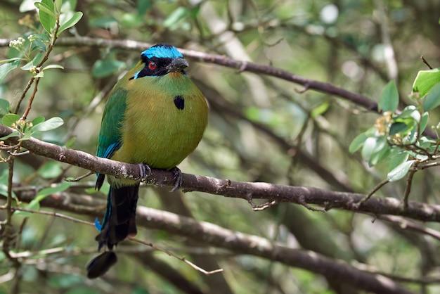 Niesamowity ptak siedzący cicho na gałęzi drzewa