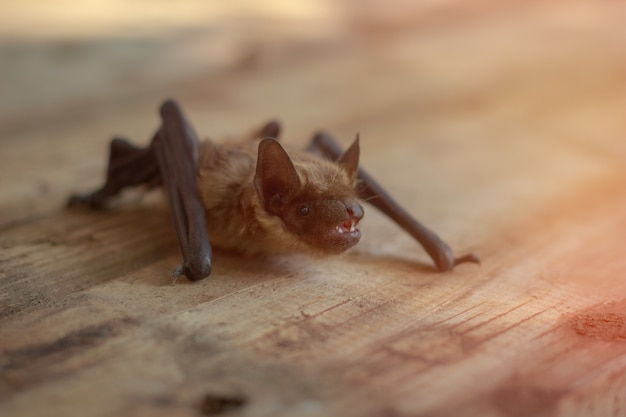 Nietoperz siedzi na drewnianym stole