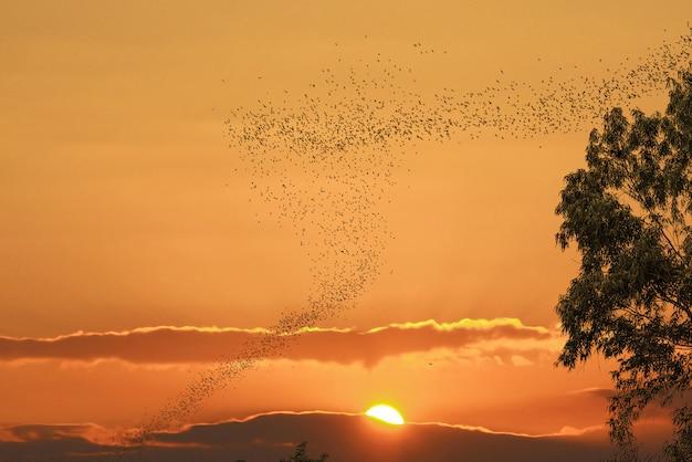Nietoperze latające przed słońcem i złotym niebem mogą wykorzystywać straszny motyw lub motyw halloweenowy