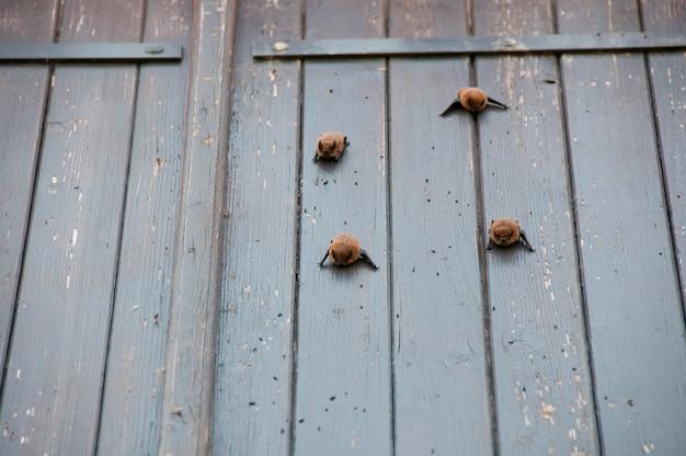 Nietoperze na niektórych okiennicach