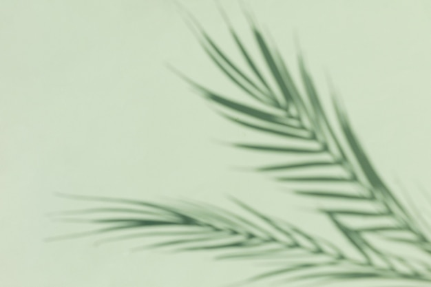 Niewyraźna sylwetka tropikalnej palmy na zielonym tle. minimalna koncepcja słonecznego lata