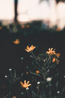 Niewyraźne miękkie obrazy żółtego kwiatu i trawy.