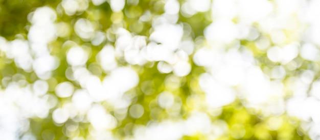 Niewyraźne miękkie zielone bokeh streszczenie natura tła