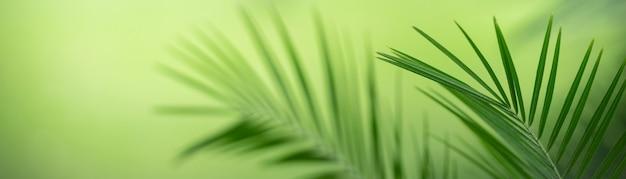 Niewyraźne natury liścia z zielonym tłem.