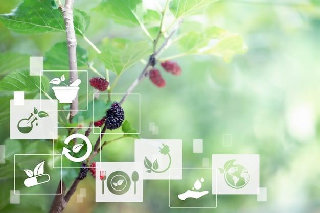 Niewyraźne owoce morwy z technologią samrt ai iot ziołowymi środkami naturalnymi logo zrównoważonej energii