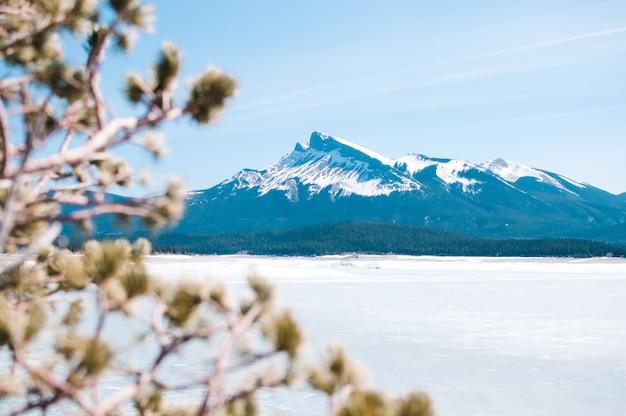 Niewyraźne rośliny i zaśnieżone góry