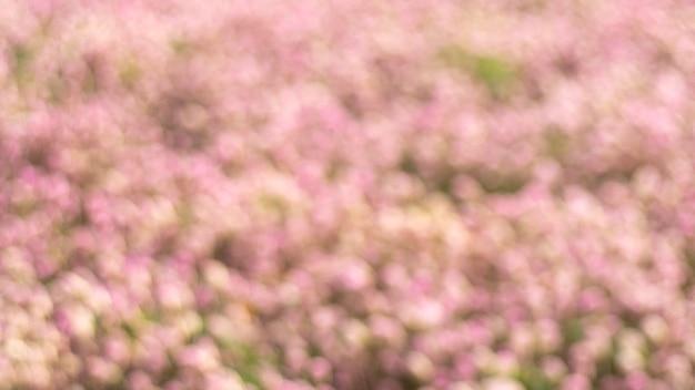Niewyraźne różowy kwiat pole