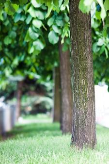 Niewyraźne rząd drzew w alei