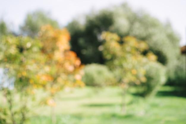 Niewyraźne tło zielonych i żółtych liści drzewa w parku latem. zdjęcie wysokiej jakości