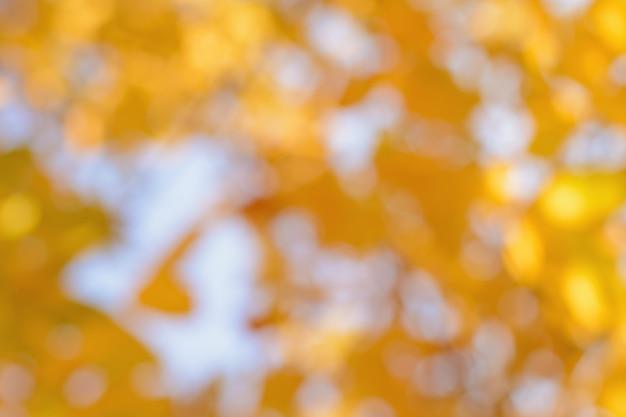 Niewyraźne żółte liście na tle nieba