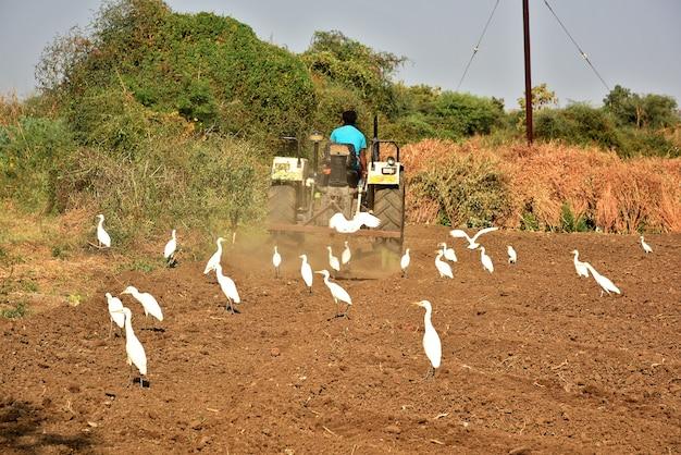 Niezidentyfikowany rolnik w ciągniku przygotowujący ziemię do siewu za pomocą kultywatora przedsiewnego.