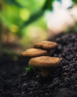 Nieznane grzyby.