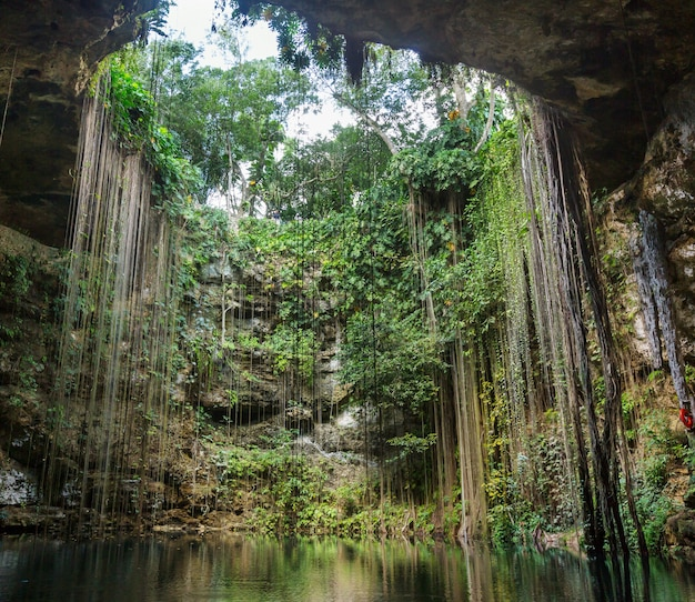 Niezwykłe Naturalne Tropikalne Krajobrazy - Ik-kil Cenote, Meksyk Premium Zdjęcia