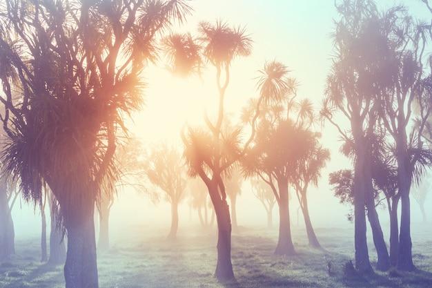 Niezwykłe rodzime drzewa kapusty w mglisty poranek