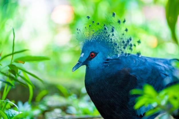 Niezwykły koronowany gołąb w zielonym parku. piękno przyrody. obserwacja ptaków
