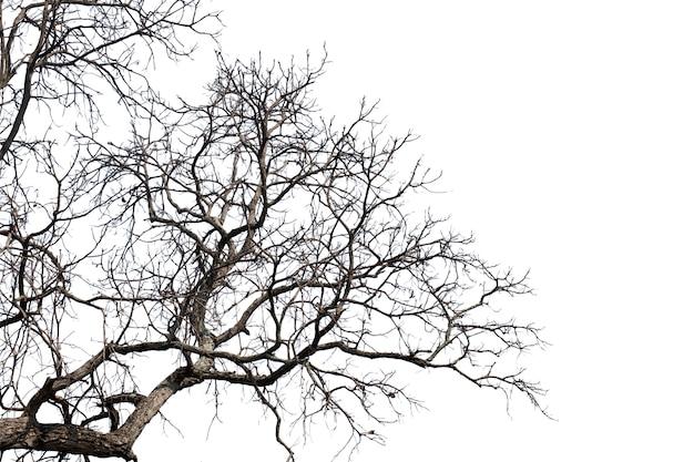 Nieżywe gałąź, sylwetki nieżywy drzewo lub suchy drzewo na białym tle z ścinek ścieżką.
