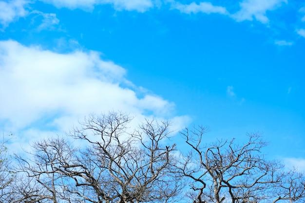 Nieżywi drzewa na niebieskim niebie