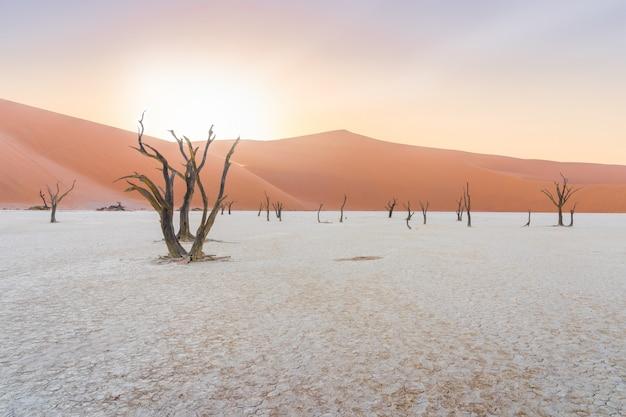 Nieżywi drzewa przy deadvlei w namib pustyni w namibia.