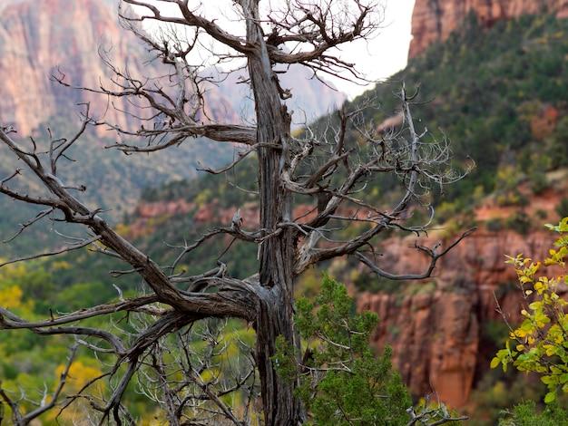 Nieżywy drzewo z rockowymi formacjami w tle, zion park narodowy, utah, usa