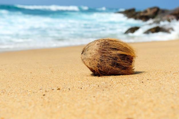 Nikt nie kokosowy na tropikalnej plaży oceanu?