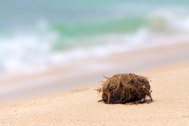 Nikt nie kokosowy na tropikalnej wyspie na plaży ocean