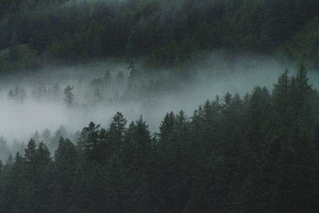 Niska chmura w alpejskim ciemnym lesie. powietrzny atmosferyczny krajobraz górski w mglistych lasach. widok z góry na mgliste leśne wzgórza. gęsta mgła wśród drzew iglastych na wyżynach. hipster, dźwięki w stylu vintage.
