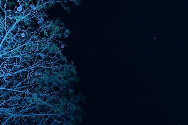 Niski kąt drzewa z rozgwieżdżone niebo