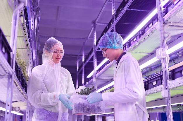 Niski kąt portretu dwóch inżynierów rolnictwa opiekujących się roślinami w szklarni szkółkarskiej oświetlonej niebieskim światłem, miejsce na kopię