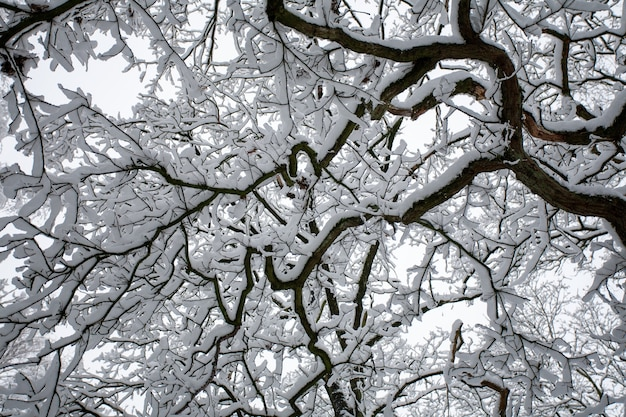 Niski kąt strzału gałęzi drzewa pokryte śniegiem w zimie