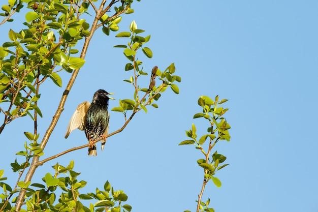 Niski kąt strzału kos siedzący na gałęzi drzewa pod jasnym, błękitnym niebem