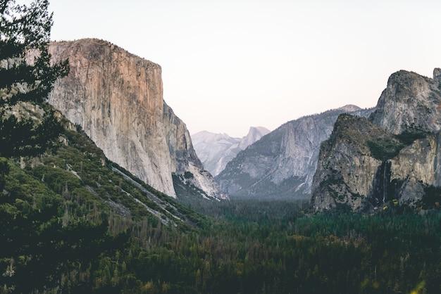Niski kąt strzału pięknej scenerii zielonego lasu pod skałami i nieba w tle