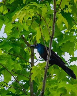 Niski kąt strzału pięknej wrony na gałęzi drzewa