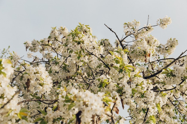 Niski kąt strzału pięknych białych kwiatów z błękitnym niebem