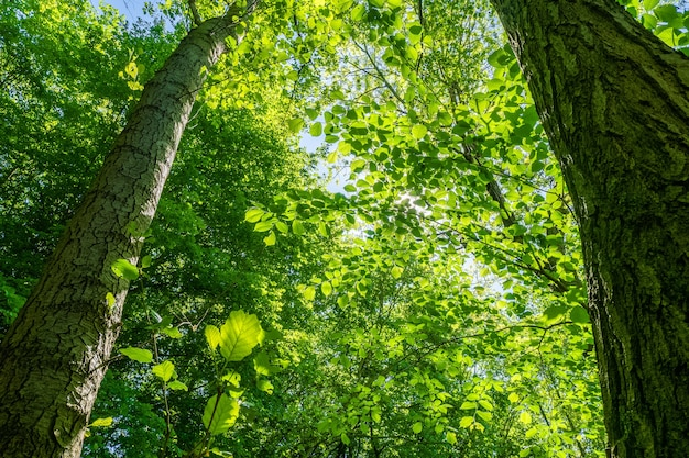 Niski kąt strzału pięknych drzew liściastych pod jasnym niebem