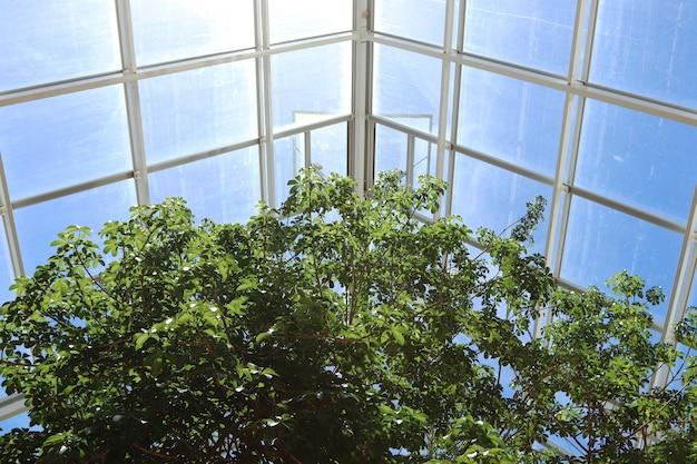 Niski kąt strzału pięknych drzew wewnątrz szklarni w świetle słonecznym