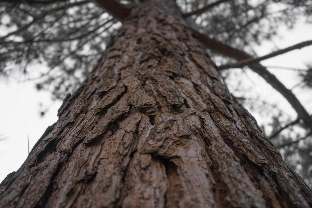 Niski kąt strzału pnia starego drzewa na tle błękitnego nieba