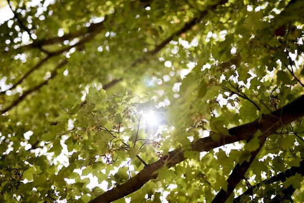 Niski kąt strzału zielonych liści ze słońcem świecącym przez gałęzie