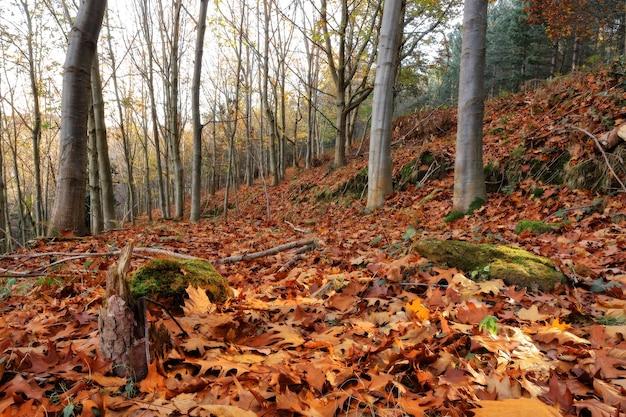 Niski kąt ujęcia drzew w lesie jesienią