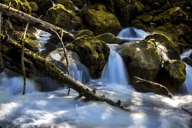 Niski kąt ujęcia hipnotyzującego wodospadu w środku lasu