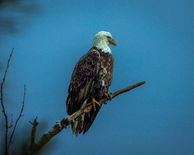Niski kąt ujęcia orła siedzącego na gałęzi drzewa