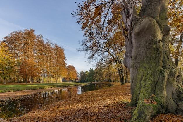Niski kąt ujęcia parku z jeziorem i drzewami w środku chłodnego dnia