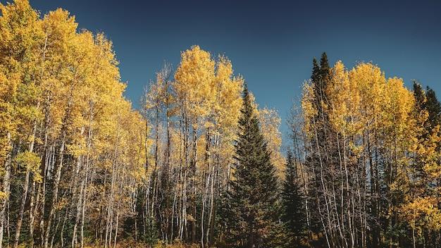 Niski kąt ujęcia pięknych zielonych i żółtych drzew pod czystym, błękitnym niebem