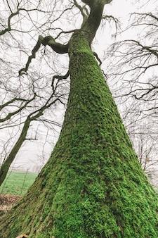Niski kąt ujęcia wielkiego drzewa w lesie z ponurym niebem