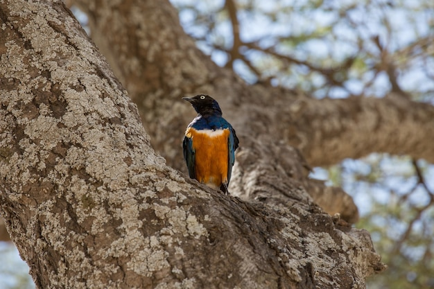 Niski kąt ujęcia wspaniałego szpaka stojącego na pniu drzewa