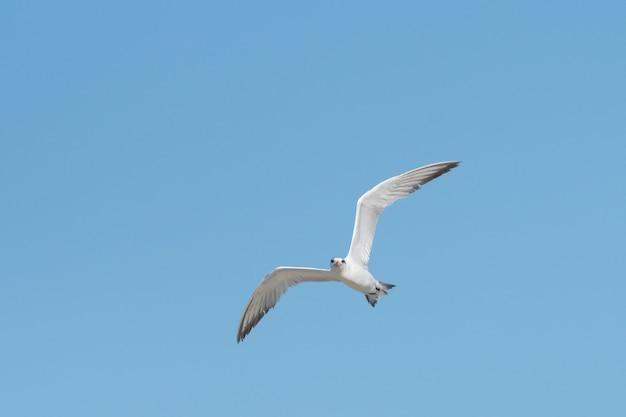 Niski kąt widzenia białej mewy szybującej na czystym, błękitnym niebie w słoneczny letni dzień