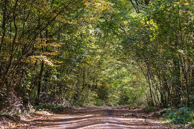 Niski kąt widzenia drogi w środku lasu jesienią. drzewa tworzące tunel nad drogą jesienią. ukraina
