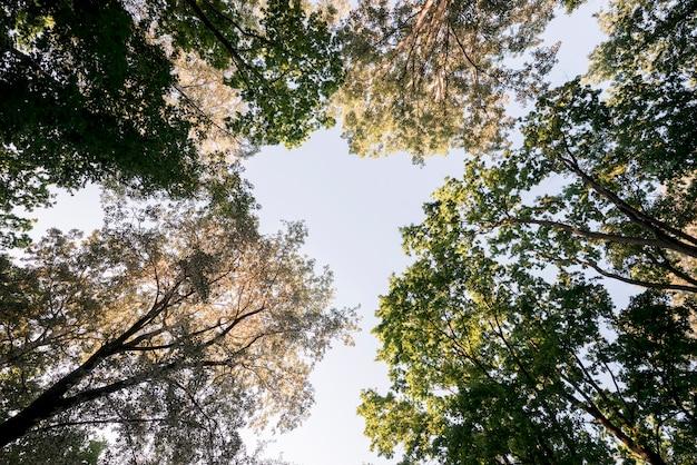 Niski kąt widzenia gałęzi drzew w parku