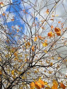 Niski kąt widzenia kolorowych liści na gałęziach drzew w słońcu i pochmurnym niebie